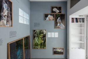 © Daniela Friebel_AUSPICIA_2018 /2020 Installation, Wandfarbe und Fotografien auf Barytpapier, gerahmt und Fotografien ungerahmt auf Tecco Wallpaper sowie Found Footage-Texte in Folienschrift